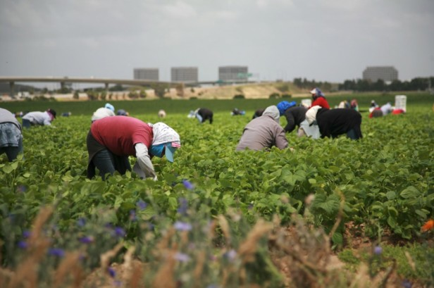Farm-workers-agriculture-1024x681