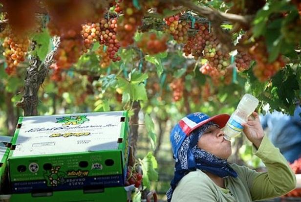 Coachella-farmworker