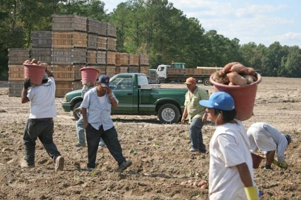 farmworker-cell-phone-2