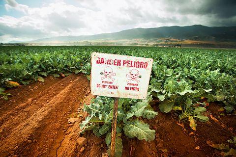 salinas-valley-pesticides-main
