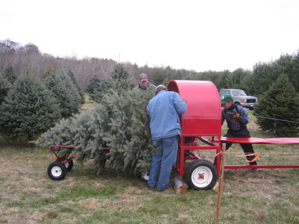 baling-a-christmas-tree