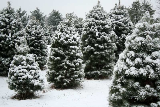 christmas-tree-farms-near-green-bay-wi