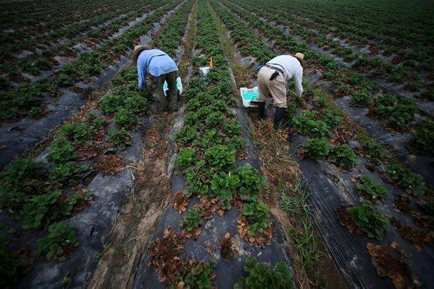 1003020_1_0913-CALIFORNIA-FARMWORKERS-OVERTIME_standard_1.jpg