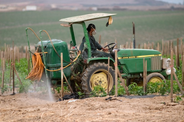 Pesticides being sprayed by a tractor on tomato plants in Del Marva, California.