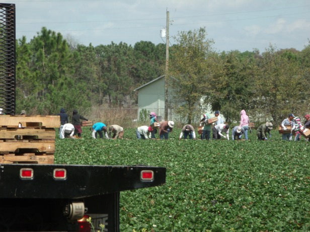 mf-Florida 2012