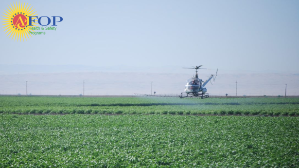 a helicopter hovers closely above a green field, spraying chemicals from a wide device attached to its underside