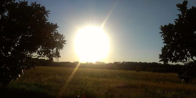 The sun glares brightly into the camera across what appears to be a field of wheat. The field is ringed with trees, and there are two trees on either side of the photo.